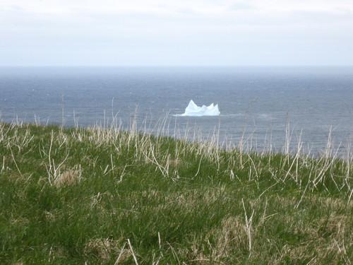 Iceberg vue de Signal Hill à St-John's